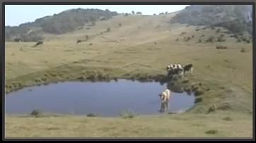 Corno d'aquilio prima parte - Parco naturale dei monti Lessini - Spluga della Preta